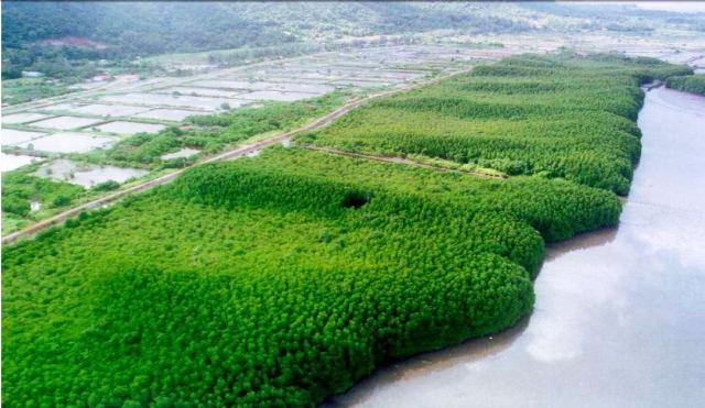 MANGROVE PARKS IN MYANMAR - READY TO BLOOM 1